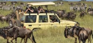 Safari parc de Tanzanie et eaux turquoise de Zanziba